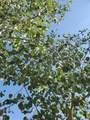 97 Hedges Circle - Photo 12