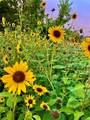 41445 Golden Field Circle - Photo 36