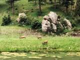 3305 Timbergate Trail - Photo 12