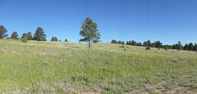 27095 Pine Vista Circle, Kiowa, CO 80117 (MLS #1861476) :: Bliss Realty Group
