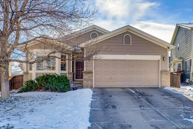 5617 Cheetah Chase, Littleton, CO 80124 (#2444884) :: Chateaux Realty Group