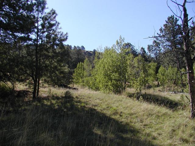 653 Lakeview Heights, Florissant, CO 80816 (MLS #2484971) :: 8z Real Estate