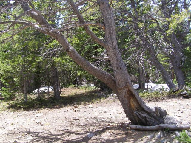 Us Forest Service 172.1A Road, Idaho Springs, CO 80452 (MLS #3688238) :: 8z Real Estate