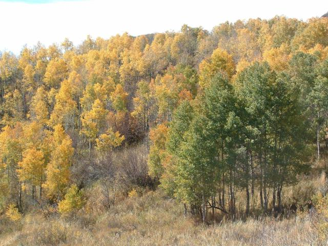 County Road 27, Oak Creek, CO 80467 (#5181836) :: The Pete Cook Home Group