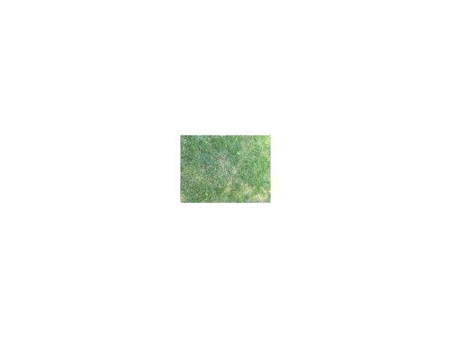 47853 County Road 97, Deer Trail, CO 80105 (MLS #6079243) :: 8z Real Estate