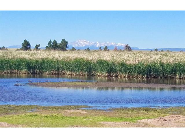 Steeple Chase, Franktown, CO 80116 (MLS #6219321) :: 8z Real Estate
