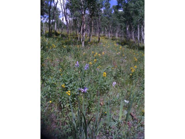 0 Michigan Hill Road, Jefferson, CO 80456 (MLS #6902357) :: 8z Real Estate