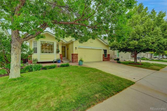 10468 Cheetah Winds, Littleton, CO 80124 (#7368013) :: The Colorado Foothills Team   Berkshire Hathaway Elevated Living Real Estate