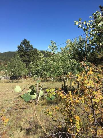 69 Smokey Rock Road, Bailey, CO 80421 (MLS #7773467) :: Neuhaus Real Estate, Inc.
