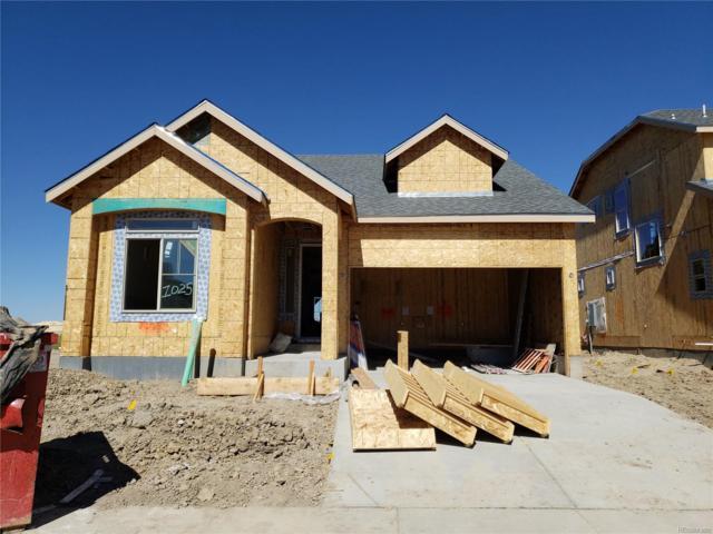 1025 Acadia Circle, Erie, CO 80516 (#8582850) :: Wisdom Real Estate