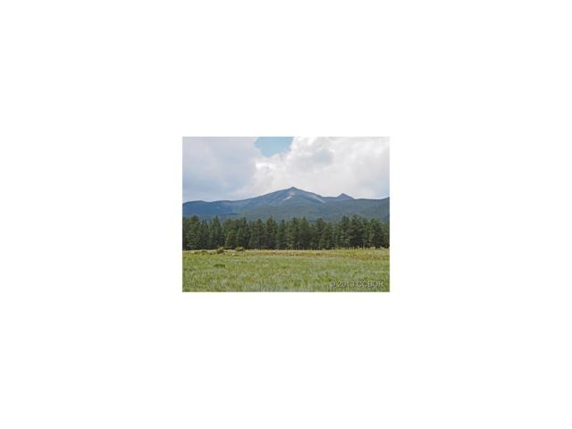 000 Wagon Trail, Buena Vista, CO 81211 (MLS #C228764) :: 8z Real Estate