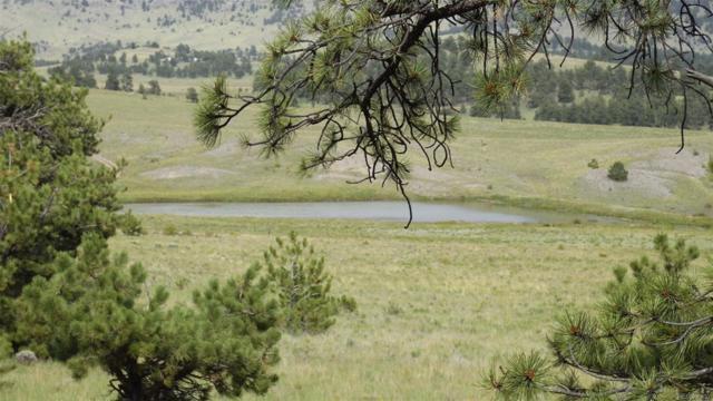 571 Old Kathleen Trail, Guffey, CO 80820 (#7785550) :: Wisdom Real Estate