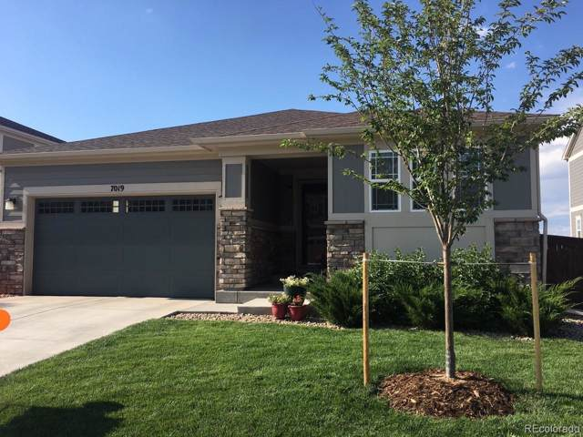 7019 E 123rd Place, Thornton, CO 80602 (MLS #8711452) :: 8z Real Estate