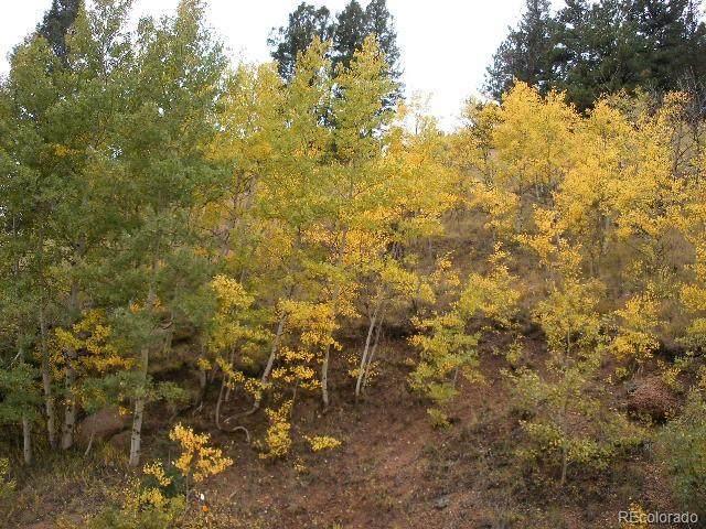 1053 Gold King Drive, Cripple Creek, CO 80813 (#2131219) :: The DeGrood Team
