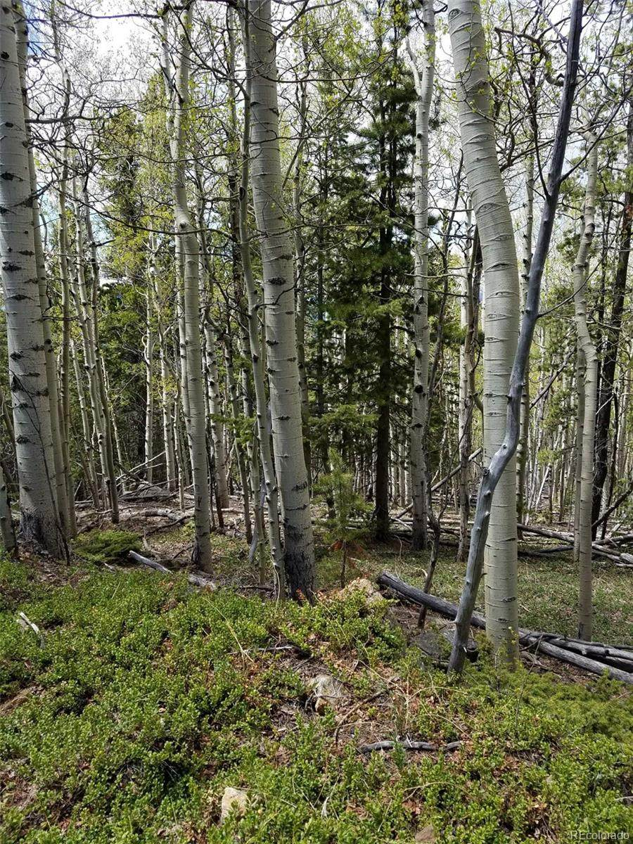 000 Hidden Wilderness Road - Photo 1