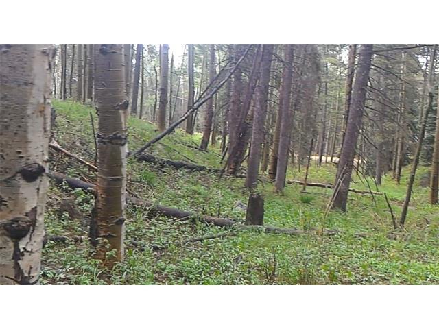 Ute Trail, Evergreen, CO 80439 (MLS #2949416) :: 8z Real Estate