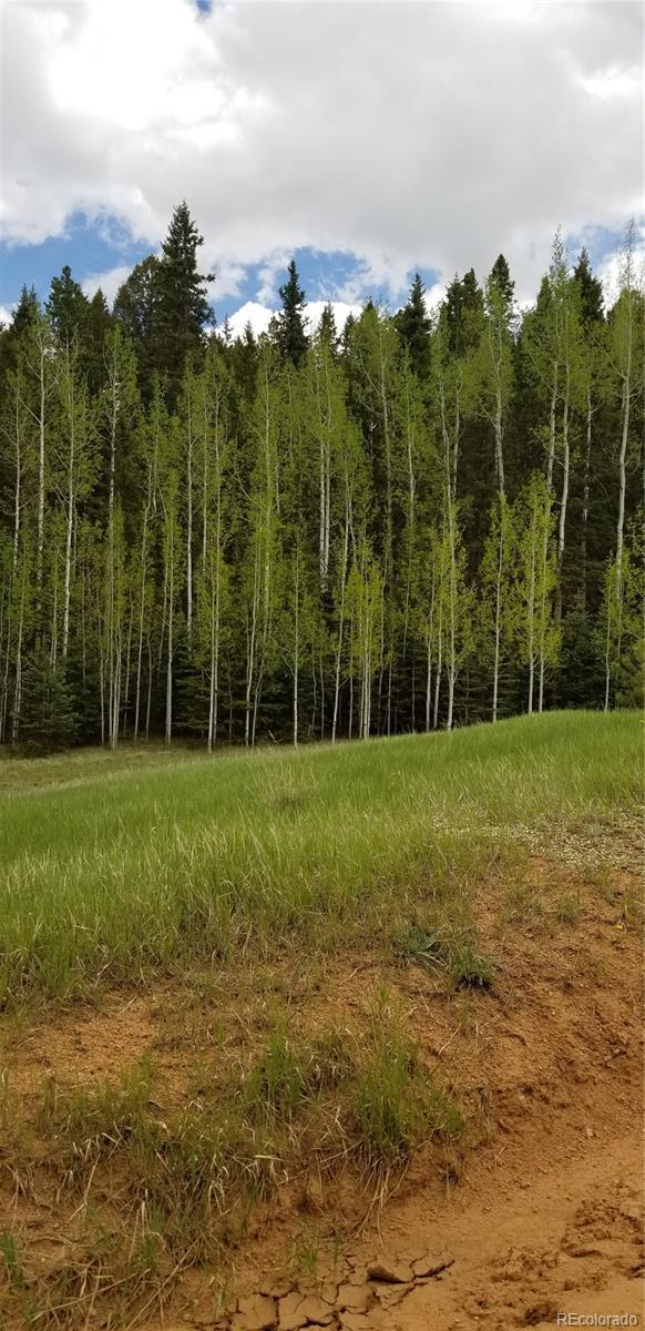 W Lake Drive, Divide, CO 80814 (MLS #3619707) :: 8z Real Estate
