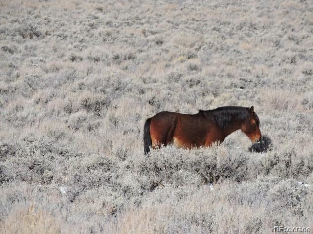 83 Elk Park Road, San Luis, CO 81152 (#4580140) :: The Heyl Group at Keller Williams