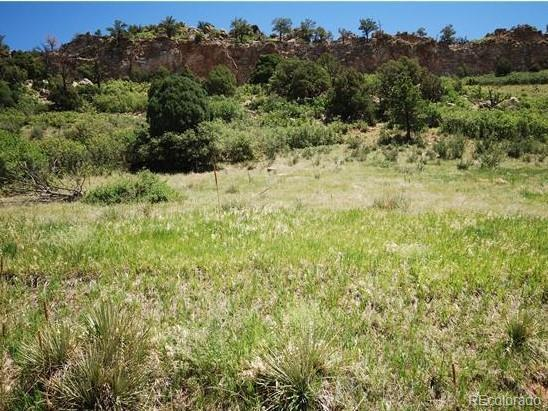 6580 Wauconda Drive, Larkspur, CO 80118 (MLS #5165398) :: 8z Real Estate