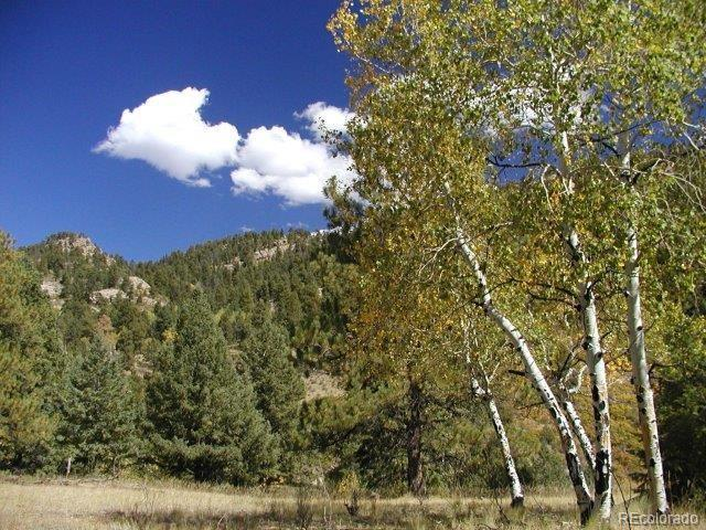 0 Secluded Canyon Heights, Florissant, CO 80816 (MLS #5573790) :: 8z Real Estate