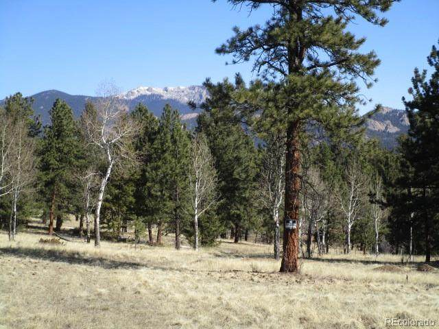 1638 Tapadero Road, Bailey, CO 80421 (MLS #6799926) :: Find Colorado