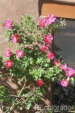 11444 Antelope Road - Photo 5