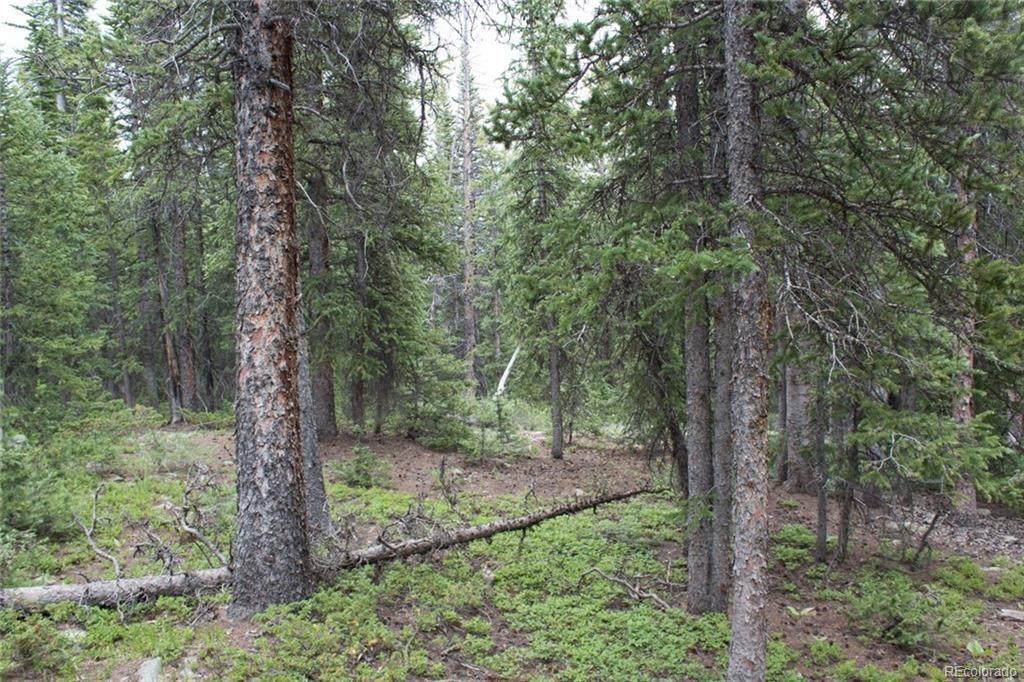 00 Timberline Trail - Photo 1
