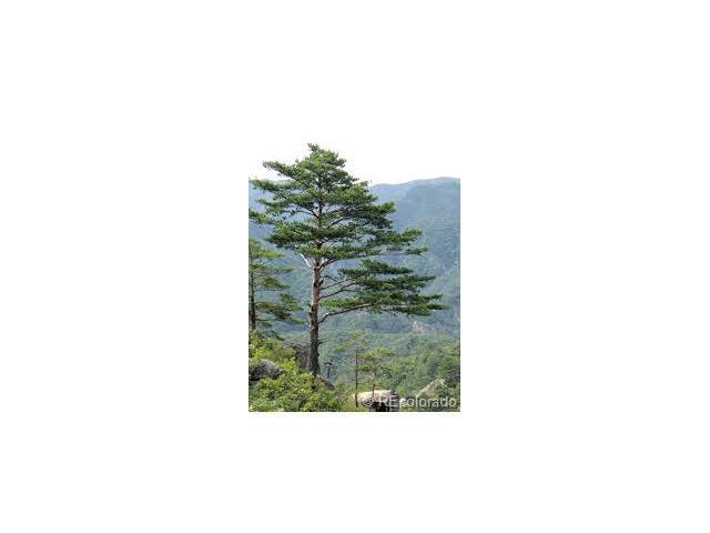 0 Beaver Creek Road, Pinecliffe, CO 80471 (MLS #1613879) :: 8z Real Estate