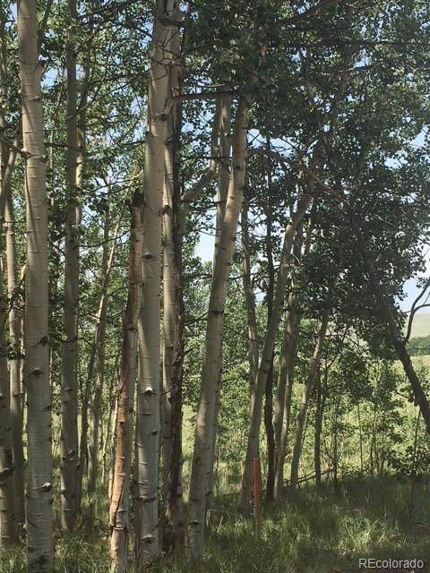 151 Anhinga Road, Como, CO 80432 (MLS #4148523) :: Clare Day with Keller Williams Advantage Realty LLC