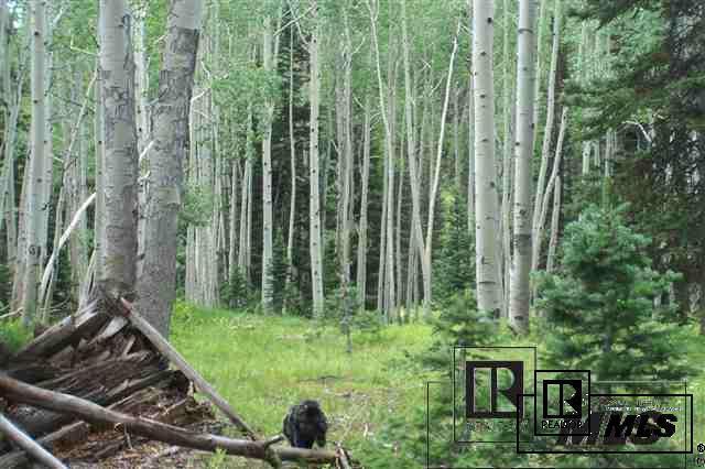 Elk Horn Mine Forest Service Road #508 - Photo 1