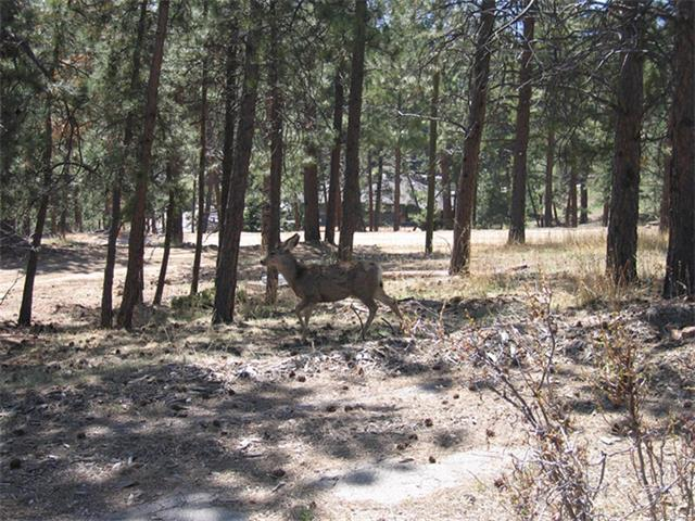4426 Ohtama Drive, Evergreen, CO 80439 (MLS #1134839) :: 8z Real Estate