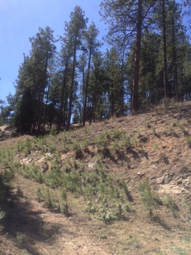 3004 Piney Ridge Road - Photo 1