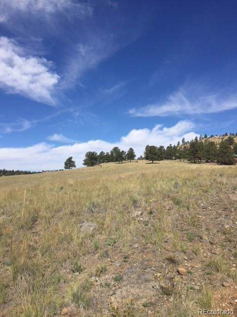 115 Saddle Lane, Florissant, CO 80816 (MLS #9646530) :: 8z Real Estate