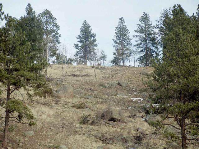 Lot 16 Lions Head Ranch, Pine, CO 80470 (#809840) :: The Healey Group