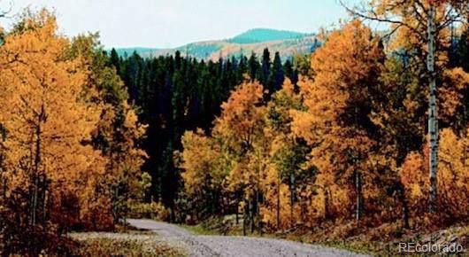 Lot 47 Black Horse II, Oak Creek, CO 80467 (#9555924) :: The DeGrood Team