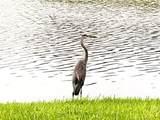 6556 Fairway Gardens Dr - Photo 6
