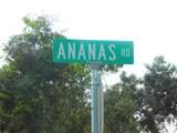 Ananas Road - Photo 18