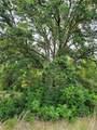 Tree Frog Lane - Photo 10