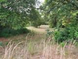 Tree Frog Lane - Photo 11