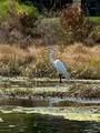 15518 Lake Burnett Shore Court - Photo 69