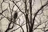 123 Red Bird Lane - Photo 2