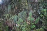 13374 Chenille Drive - Photo 6