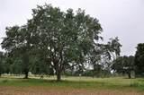Oak Pointe Preserve Lot 24 - Photo 9