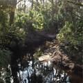 Branch Crossing - Photo 10