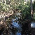 Branch Crossing - Photo 8