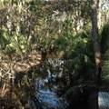 Branch Crossing - Photo 9