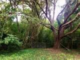 801 Camellia Avenue - Photo 3