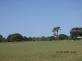 Calendula Drive - Photo 5