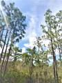 0 Bougainvillea - Photo 3