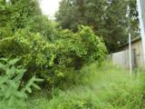 206 Rontunda Drive - Photo 8